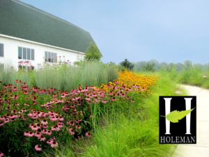 Where To Native Plants Inps